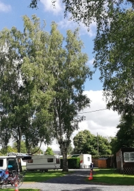 La Roisin campsite