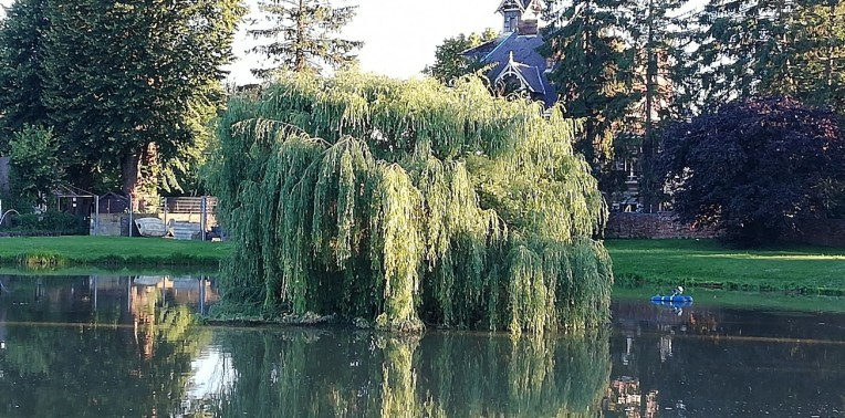 Gorgeous weeping willow in the centre of one of the fish ponds